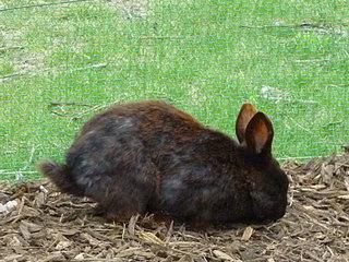 ウサギ_黒.jpg